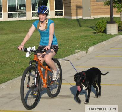 Dog Bike Leash Walkydog Biking Leash That Mutt