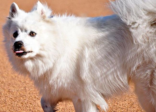 Teaching Kids About Approaching Strange Dogs