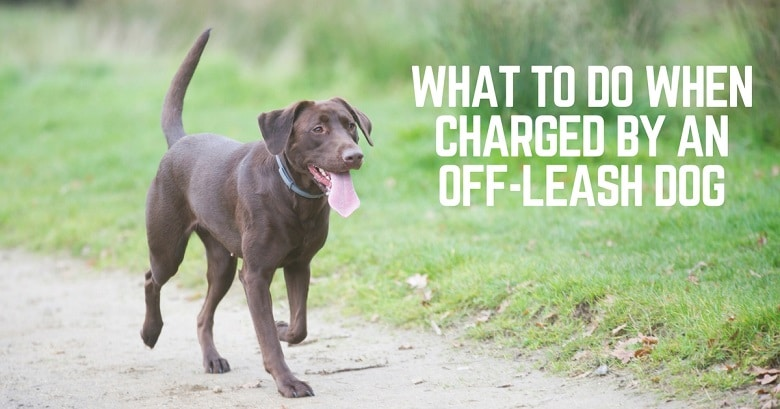 charges-by-off-leash-dog