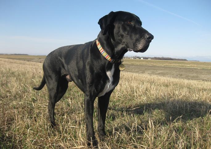 Petsmart Dog Breed Test