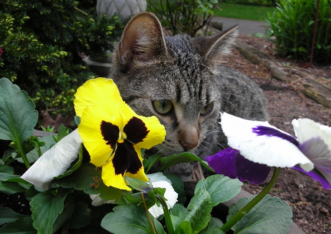 Gray tabby cat sitting by bright flowers