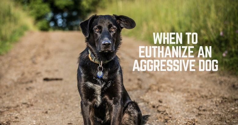 When to euthanize an aggressive dog thatmutt a dog blog how do you know when to euthanize an aggressive dog solutioingenieria