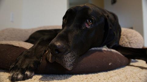 Help a fearful dog