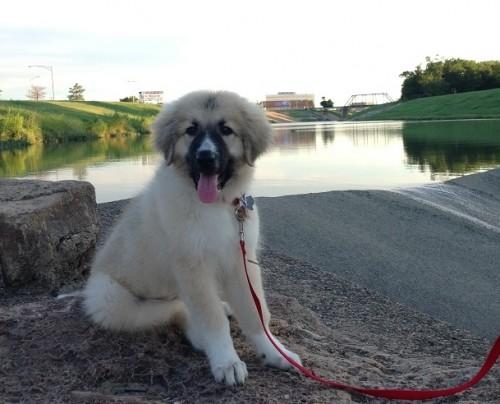 Mutt Calendar Contest winners - ThatMutt.com: A Dog Blog
