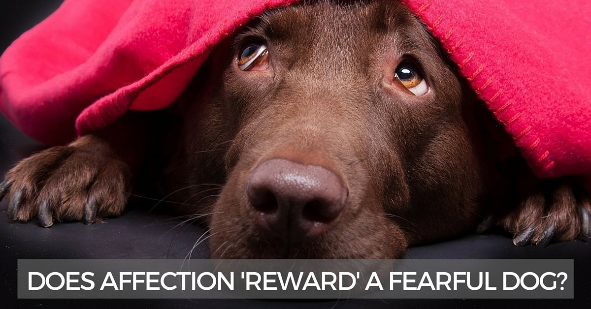 Will affection reward a fearful dog?