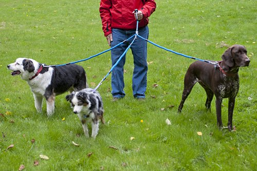 How To Walk Multiple Dogs Together