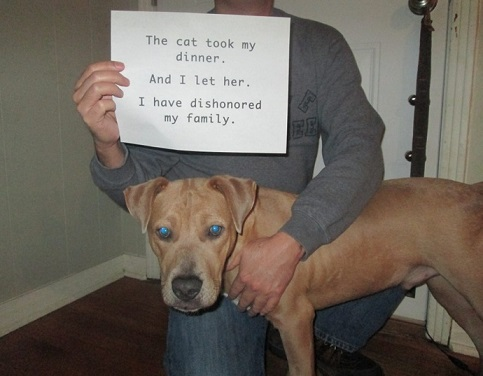 Dog Shaming 10 Photos A Dog Blog