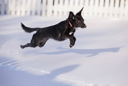 Small black dog in the snow