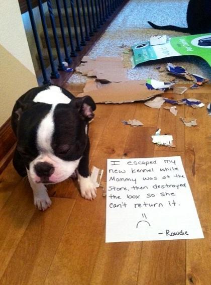 Dog Shaming 10 Photos Thatmutt Com A Dog Blog