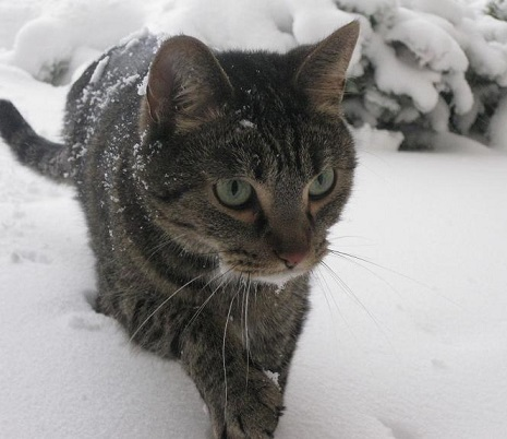 My cat in the snow