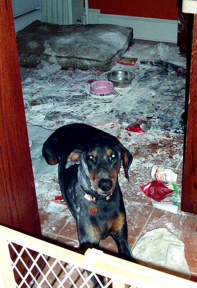 Dobie destroys kitchen
