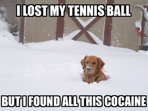 Lost tennis ball in snow