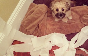 Oh, that wasn't for shredding? (10 photos)