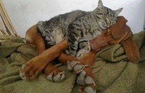 Dogs and Cats Cuddling (10 photos)