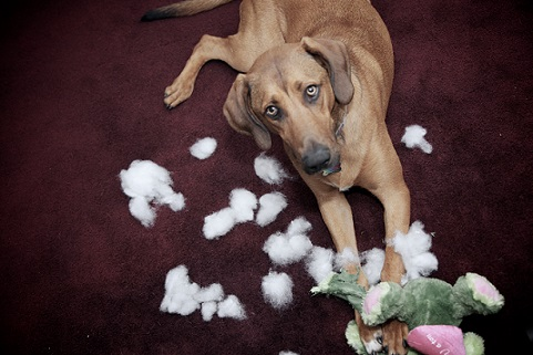 Dog ruins stuffed toys