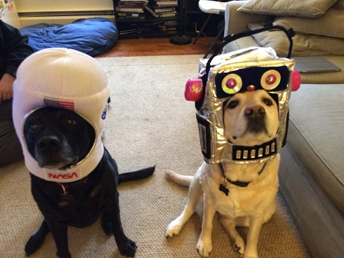 Labs in space suit costumes