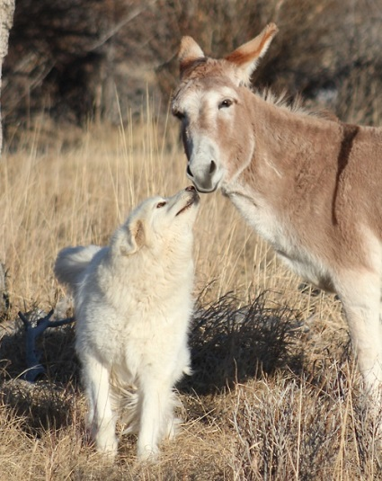 Dog and donkey friends
