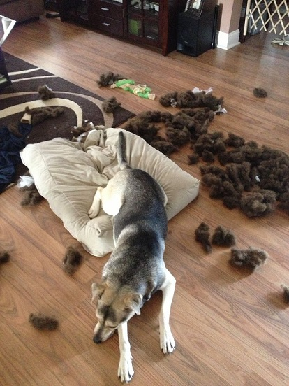 Dog ripped apart the dog bed