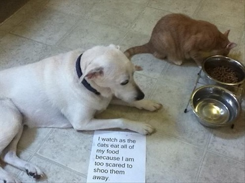 Cat steals dog's food