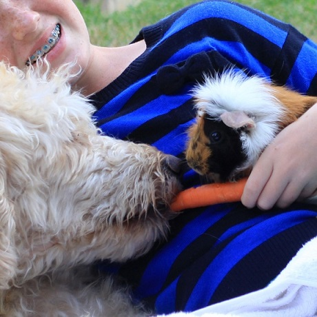 Dog friends with guinea pig