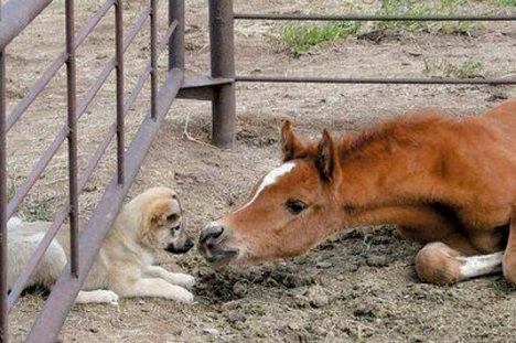 Puppy friends with foal