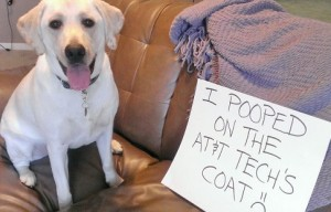 Dog Shaming (10 photos)
