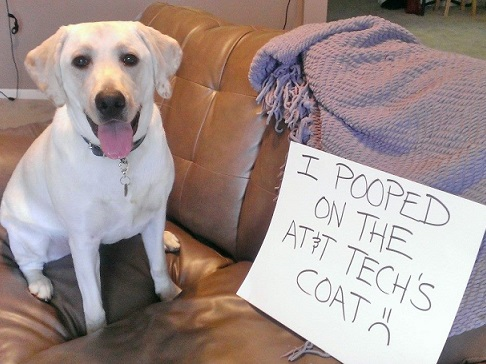 Dog shaming yellow Lab pooped on man's coat
