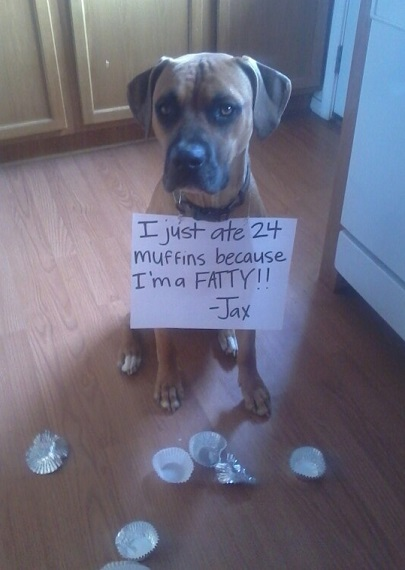 Dog ate all the muffins