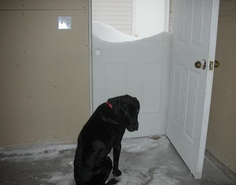 Black Lab thinks there's too much snow