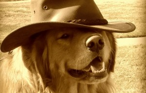 Help prevent canine cancer, join the golden retriever lifetime study