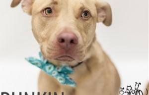 Excellent adoption promo video by the SPCA of Wake County (N.C.)