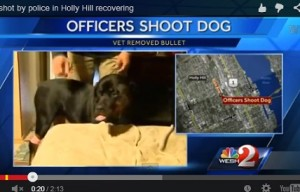 Dogs in the News: Another good dog shot by police