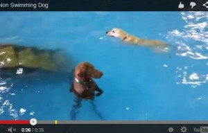 Aww, the non-swimming dog