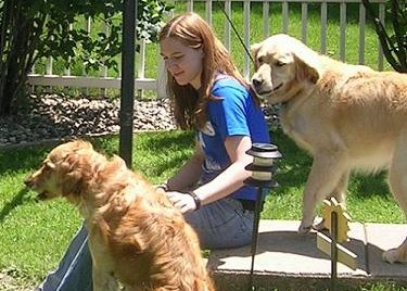 Lindsay's Column: What does 'no kill' really mean?