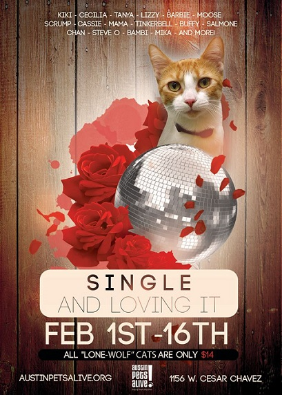 Single and Loving it cat adoption special