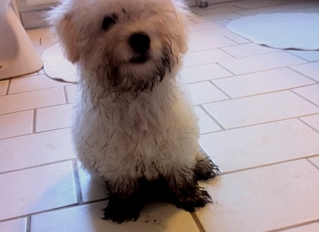 Muddy little dog