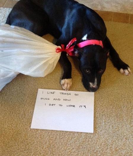 Dog keeps getting into the trash