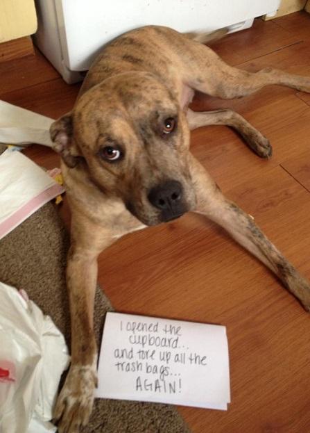 Dog keeps stealing trash bags