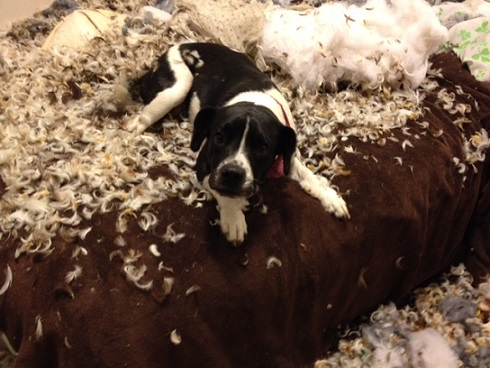 Dog chewed up bed