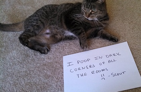 Cat shaming featuring beamer and scout thatmuttcom a for How to keep cat from pooping on floor