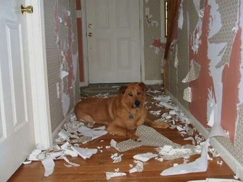 Dog ripped up the wall paper