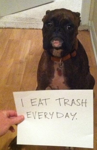 Dog Shaming boxer