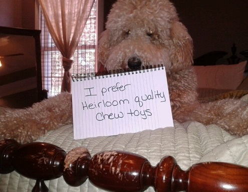 Poodle dog shaming