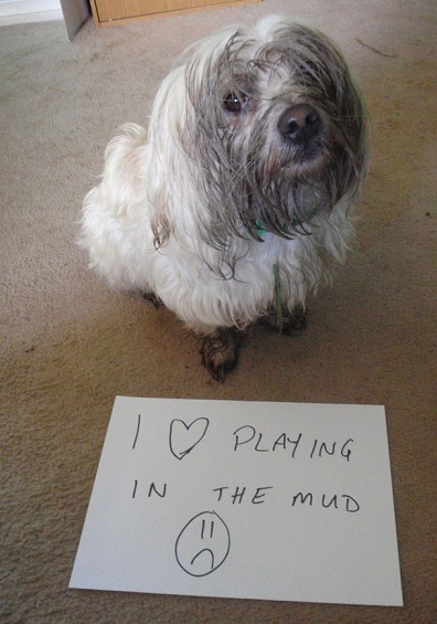 This dog loves the mud!