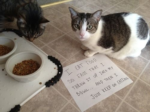 Cat pukes up food and keeps eating