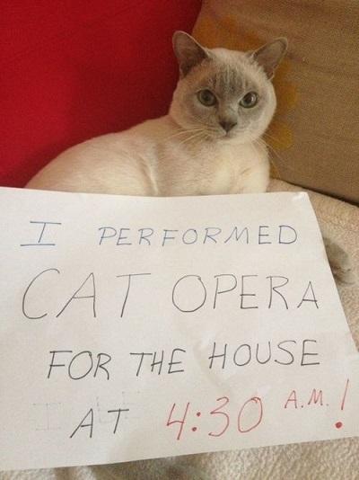 Cat performed cat opera at 4:40 am