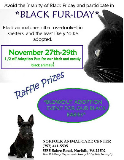 Black Friday adoption event