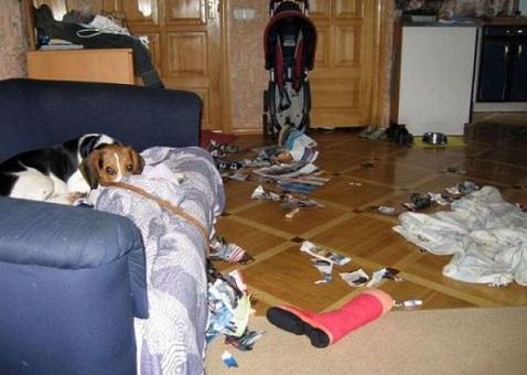 Beagle ripped up magazines