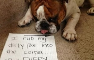 Dog Shaming (10 photos)