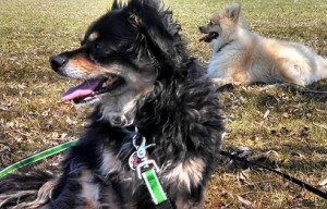 Training Tips: Will my dog behave at the dog park?